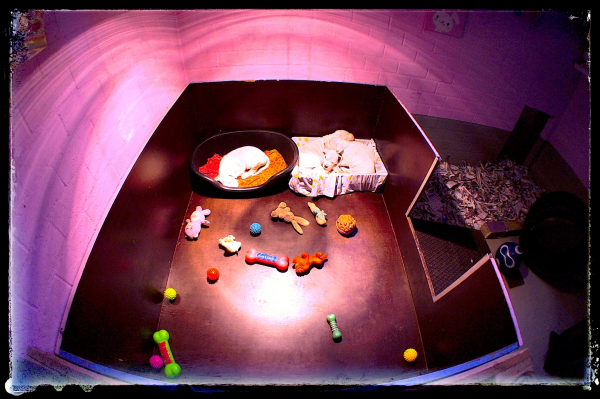 Slideshow Image 12
